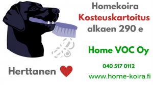 Homekoira Herttanen hoitaa homeesi kosteuskartoitus Home VOC Oy