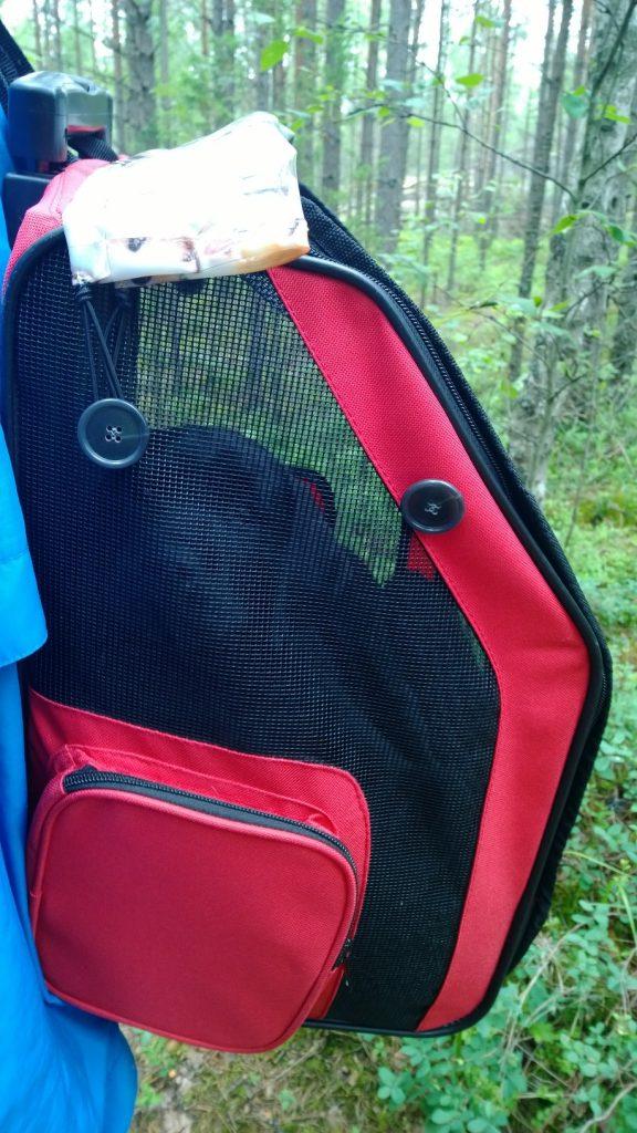Home VOC Kennel Hertanen Labrador Pentuna sienimetsässä-ekan sienen löytsi 9 viikkoisena
